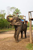 CHITWAN, NEPAL-MARCH 27: Elephant safari 27, 2015 in Chitwan, Ne Royalty Free Stock Photography