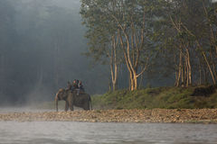 CHITWAN, NEPAL - NOVEMBER 23, 2014: Elephants walking on the law Stock Photos