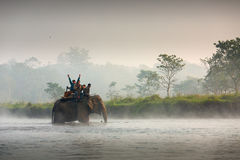 CHITWAN, NEPAL - NOVEMBER 23, 2014: Elephants walking on the law Stock Images