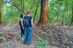 CHITWAN NEPAL - NOVEMBER 03, 2017: Oidentifierat folk inom av skogen med några torra blad i jordningen in Royaltyfri Bild