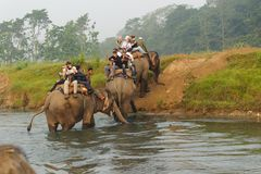 CHITWAN, NEPAL - OCTOBER 27, 2014: Elephants crossing the river at Elephant safari tour Chitwan National Park.Chitwan National Par Royalty Free Stock Photography