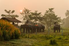 CHITWAN, NEPAL - OCTOBER 27, 2014: Elephants waiting for Elephant safari tour on the lawn Chitwan National Park.Chitwan National P Stock Photo