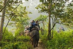 CHITWAN, NEPAL - OCTOBER 27, 2014: Elephants walking on the lawn at Elephant safari tour Chitwan National Park.Chitwan National Pa. CHITWAN, NEPAL - OCTOBER 27 royalty free stock images