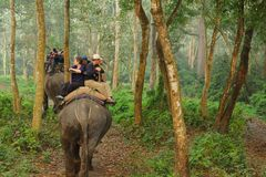 CHITWAN, NEPAL - OCTOBER 27, 2014: Elephants walking on the lawn at Elephant safari tour Chitwan National Park.Chitwan National Pa. CHITWAN, NEPAL - OCTOBER 27 royalty free stock photography