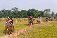 CHITWAN, NEPAL - 27 OTTOBRE 2014: Gli elefanti che camminano sul prato inglese al safari dell'elefante visitano il parco nazional Immagine Stock Libera da Diritti