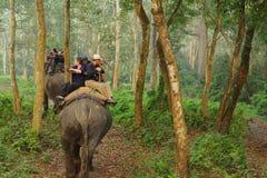 CHITWAN, NEPAL - 27 OTTOBRE 2014: Gli elefanti che camminano sul prato inglese al safari dell'elefante visitano il parco nazional Fotografia Stock Libera da Diritti