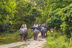 Tourists visiting the jungle on the backs of elephants. CHITWAN, NEPAL - September 27, 2013: Tourists visiting the jungle on the backs of elephants. In the royalty free stock photography