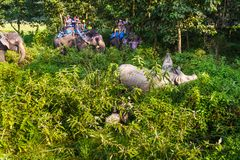 Tourists visiting the jungle on the backs of elephants. royalty free stock photo