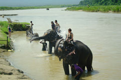 CHITWAN, np-CIRCA AUGUSTUS 2012 - een mens op olifant neemt binnen een bad Royalty-vrije Stock Fotografie