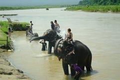 CHITWAN, NP-CIRCA im August 2012 - ein Mann auf Elefanten nimmt ein Bad herein Lizenzfreie Stockfotografie