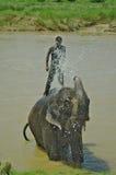 CHITWAN, NP-CIRCA im August 2012 - ein Mann auf Elefanten nimmt ein Bad herein Stockfotos