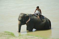 CHITWAN, NP-CIRCA im August 2012 - ein Mann auf Elefanten nimmt ein Bad herein Lizenzfreie Stockbilder
