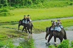 CHITWAN, NP-CIRCA im August 2012 - Touristen, die Safari auf Elefanten tun stockfotografie