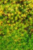 Chiuda fino a muschio verde e giallo Fotografie Stock