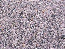 Chiuda su colore di porpora del riso Immagine Stock Libera da Diritti
