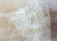 Chiuda su coltivazione del fungo con segatura Immagine Stock