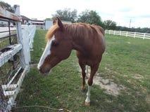 Chiuda su con un cavallo Fotografia Stock