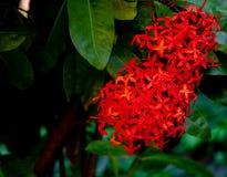 Chiuda su da fioritura rossa esotica fotografia stock libera da diritti