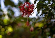 Chiuda su da una fioritura esotica rossa fotografia stock libera da diritti