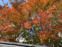 Chiuda su degli alberi verdi, gialli, rossi e rosa nella caduta fotografie stock