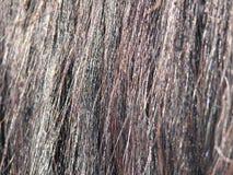 Chiuda in su dei capelli del cavallo fotografia stock libera da diritti