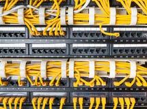 Chiuda su dei cavi gialli della rete collegati al commutatore Immagini Stock
