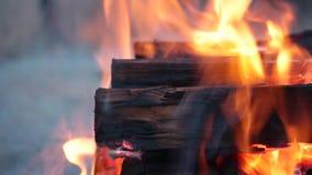 Chiuda su dei ceppi che bruciano su un fuoco di accampamento stock footage