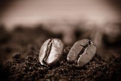 Chiuda su dei chicchi di caffè e del mucchio del caffè Fotografia Stock