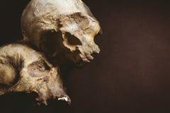 Chiuda su dei crani umani Fotografie Stock