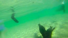 Chiuda su dei cuccioli di foca archivi video