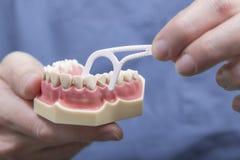 Chiuda su dei denti modello e filo di seta Immagini Stock