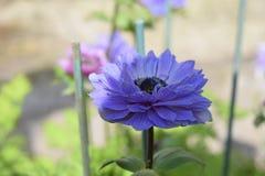 Chiuda su dei fiori in fioritura Immagine Stock Libera da Diritti