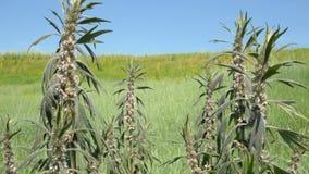 Chiuda su dei fiori selvaggi nell'erba che scuote con il vento 4K si chiudono su archivi video
