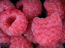 Chiuda su dei lamponi dolci freschi, fondo fotografia stock