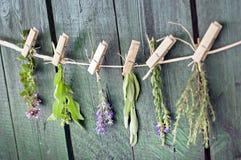 Chiuda su dei mazzi Mediterranei delle erbe, la salvia, il basilico, la lavanda, timo sul fondo di legno verde rustico della tavo fotografia stock libera da diritti