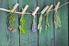 Chiuda su dei mazzi Mediterranei delle erbe, la salvia, il basilico, la lavanda, timo sul fondo di legno verde rustico della tavo immagine stock libera da diritti