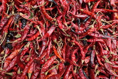 Chiuda su dei peperoncini rossi rossi secchi fotografia stock libera da diritti