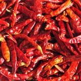 Chiuda in su dei peperoncini rossi secchi, ingrediente di alimento tailandese Fotografie Stock Libere da Diritti