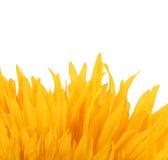 Chiuda su dei petali gialli artificiali del fiore. Fotografie Stock Libere da Diritti