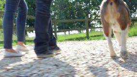 Chiuda su dei piedi della coppia che prendono il cane per la passeggiata in campagna stock footage