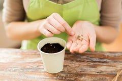 Chiuda su dei semi della semina della donna per sporcare in vaso Fotografia Stock