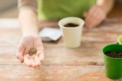 Chiuda su dei semi della tenuta della mano della donna Immagini Stock Libere da Diritti