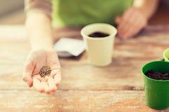 Chiuda su dei semi della tenuta della mano della donna Immagine Stock