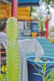 Chiuda su del cactus sul fondo della sfuocatura Fotografia Stock