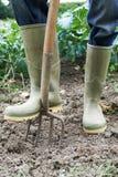 Chiuda su del campo dell'azienda agricola di Working In Organic dell'agricoltore Immagini Stock
