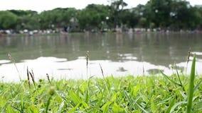 Chiuda su del campo di erba verde con fegato Campo verde del fondo dell'erba stock footage