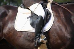 Chiuda su del cavaliere durante la concorrenza di dressage Immagini Stock Libere da Diritti
