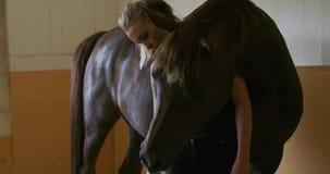 Chiuda su del cavallo del araban di alimentazione e di coccole della donna in stalla video d archivio