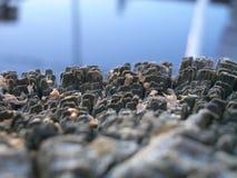 Chiuda su del ceppo di legno decomposto ruvido Fotografie Stock