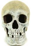 Chiuda in su del cranio umano Fotografia Stock